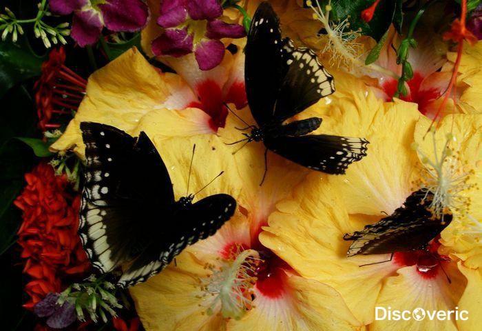 сад бабочек пхукет отзывы водка