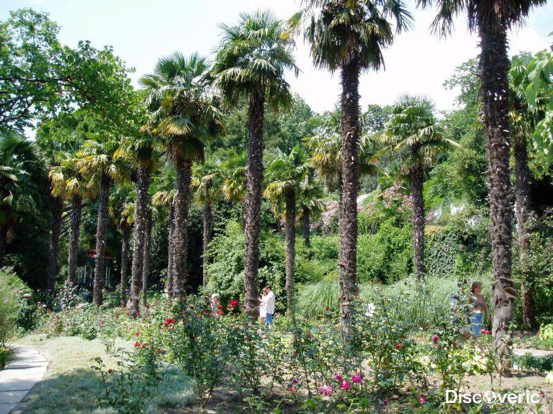 Никитский ботанический сад с фото, описанием, картой и ...: http://discoveric.ru/mesta/rossiya/krym/nikitskij-botanicheskij-sad