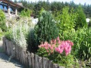 Городской сад и Курортный парк, Алитус, Литва