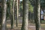 Региональный парк излучин Нямунаса, Бирштонас, Литва