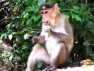 Заповедник Бондла, Гоа, Индия