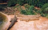 Крокодиловая ферма, Найроби, Кения