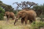 Национальный парк Амбосели, Кения