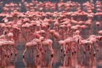 Озера, Кения