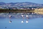 Соляное озеро, Ларнака, Кипр